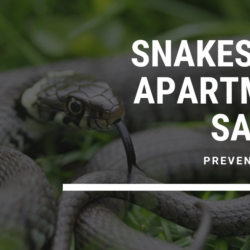 Snakes and Apartment Safety