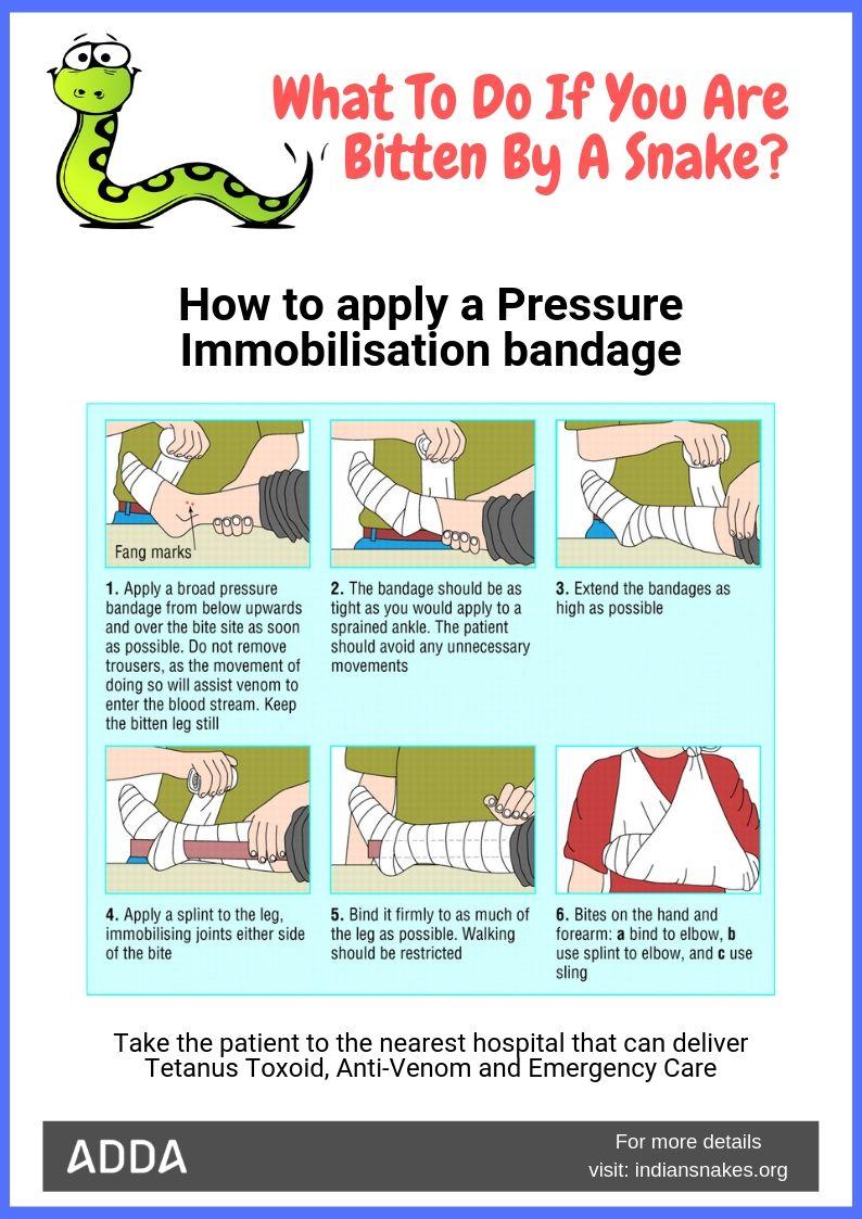 snakebite precautions