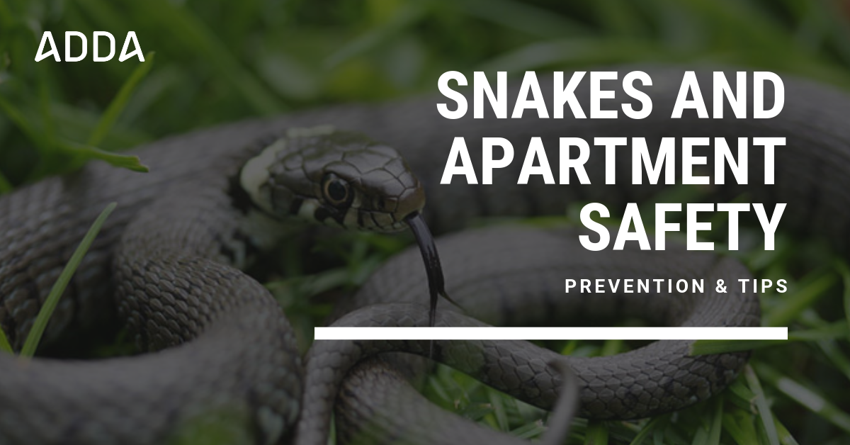 Snakes and Apartment Safety: Prevention & Tips