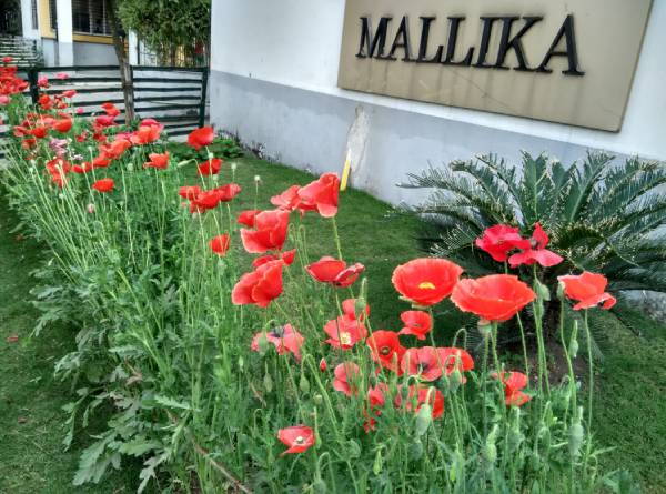 Mallika Malancha