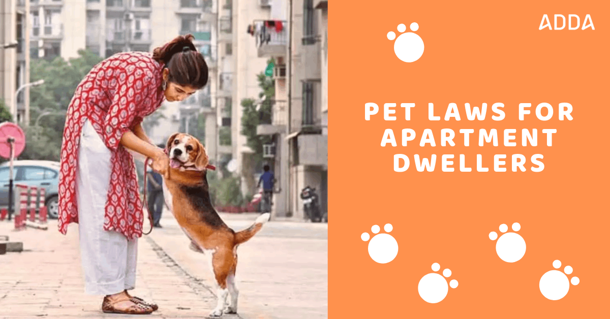 Pet Laws for Apartment Dwellers