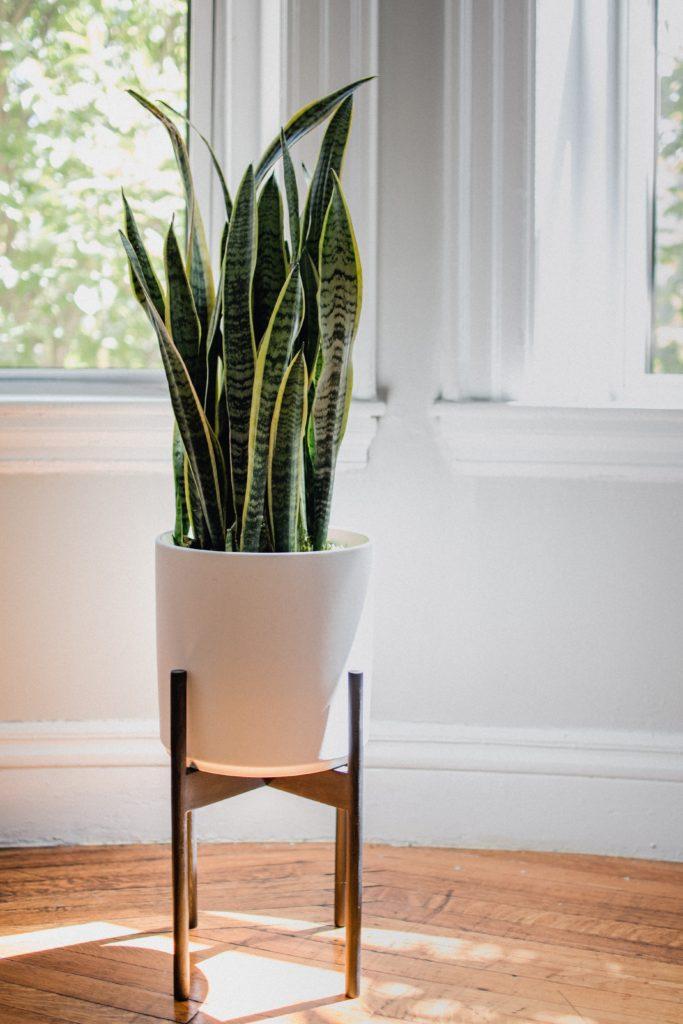 indoor plants in apartments